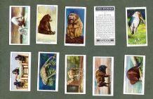 Collectible cigarette cards set Zoo Studies,Polar Bears,Elephants,, Lion,Flamingo